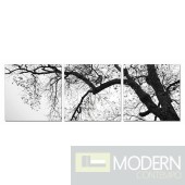 Modrest Branch 3-Panel Photo On Canvas