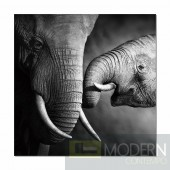 Modrest Elephant Photo On Canvas