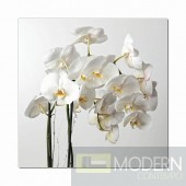 Modrest Orchid Photo On Canvas